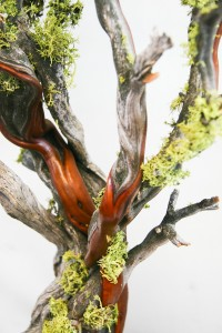 Natural Manzanita w/ Moss